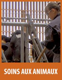 soin des animaux