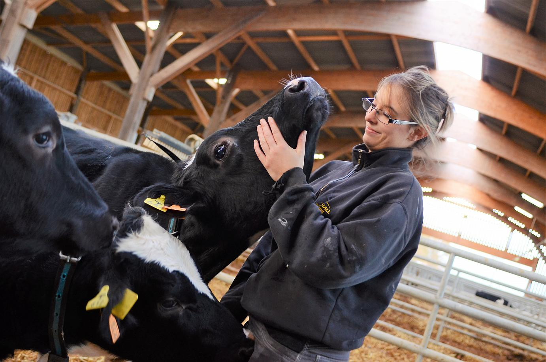 Formation - Le bien-être animal chez les ruminants