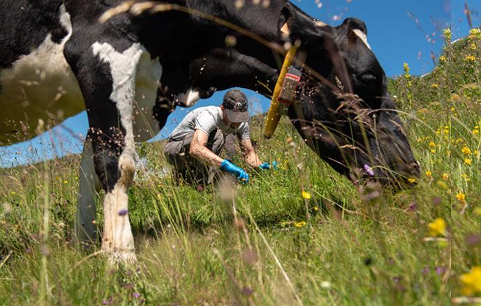 La signature aromatique et microbiologique des prairies naturelles