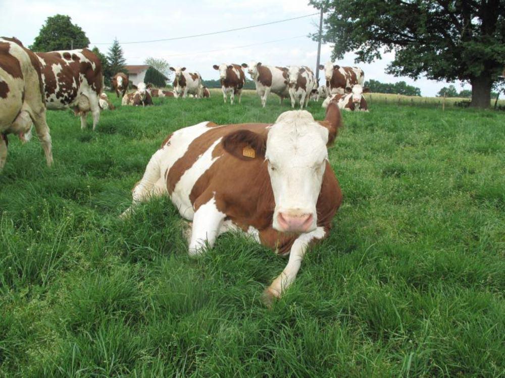 La responsabilité sociétale, un passage obligé pour la filière laitière