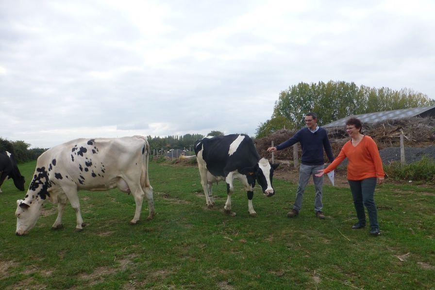 Comment travaille-t-on dans une ferme laitière