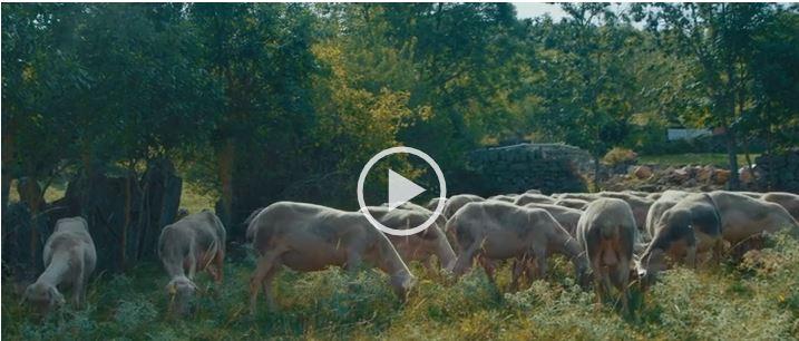 Websérie Tricolor : immersion dans les filières lainières françaises