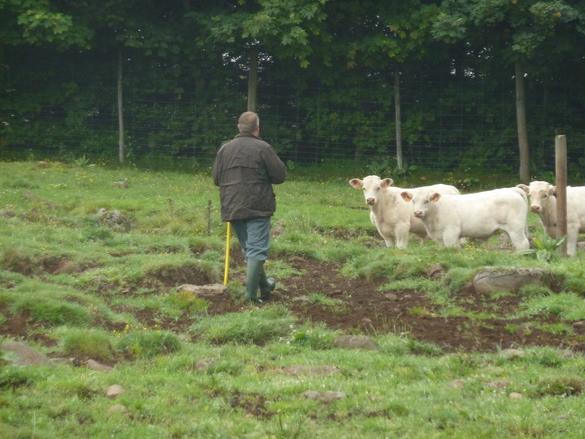 L'éleveur et son troupeau de bovins allaitants : une relation à construire