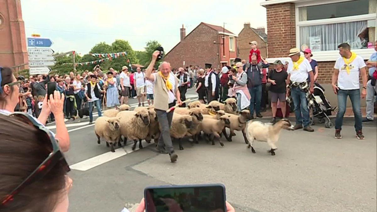 Berthen : découvrez la plus petite transhumance de moutons de France