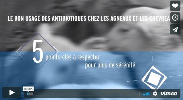 Le bon usage des antibiotiques chez les agneaux et les chevreaux.