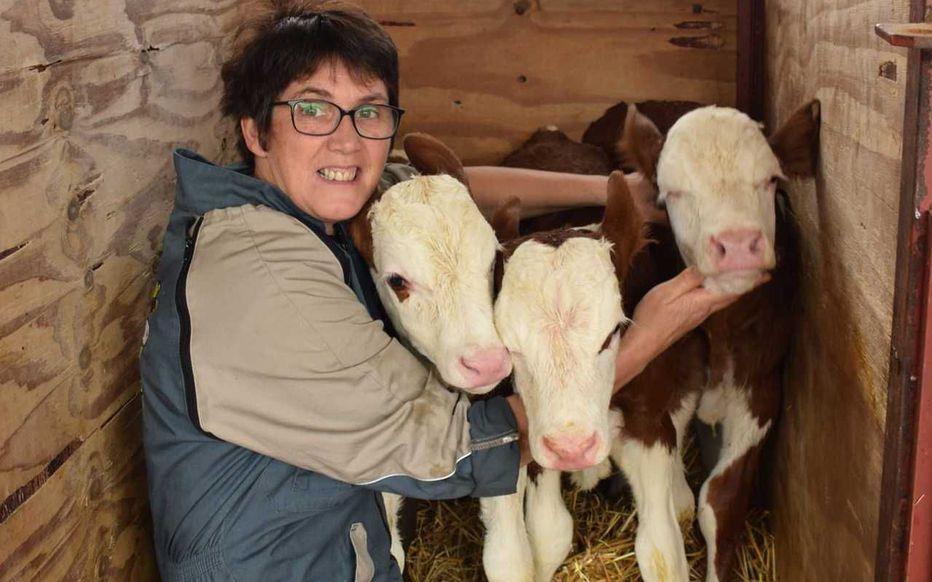 Doubs : une vache donne naissance à de rares triplés