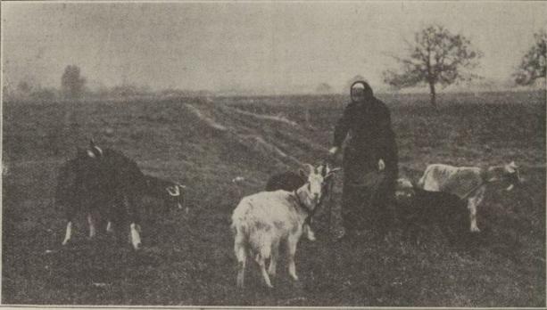 Le fromage de chèvre de Levroux