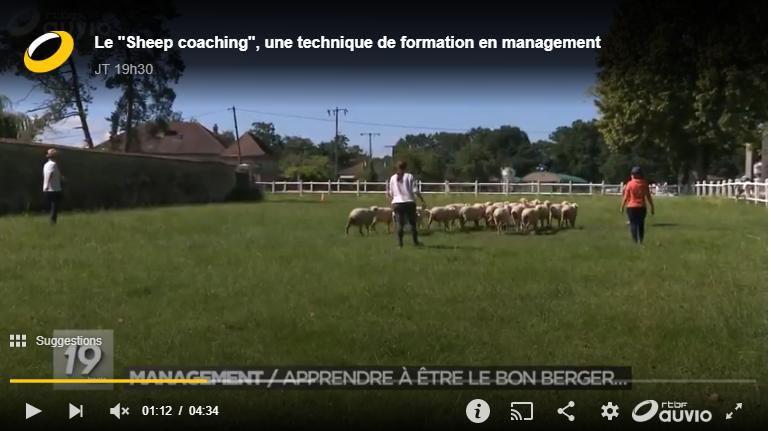 Le Sheep coaching: les cadres sont-ils des moutons?