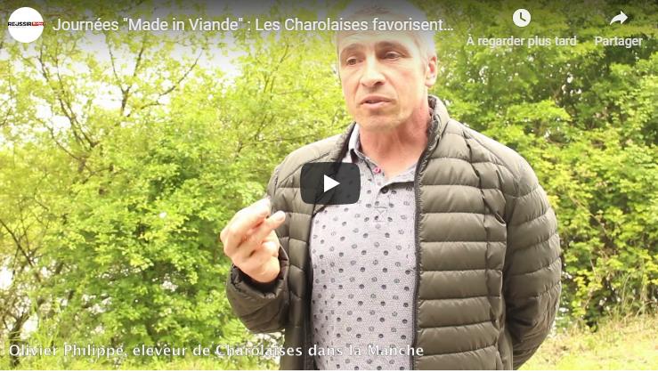 'VIDEO' Les Charolaises favorisent la biodiversité du marais