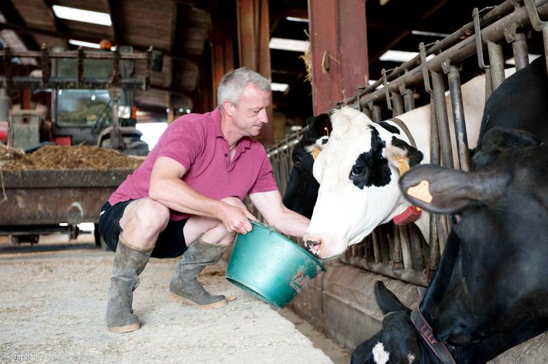 Le travail en élevage laitier fait sa révolution
