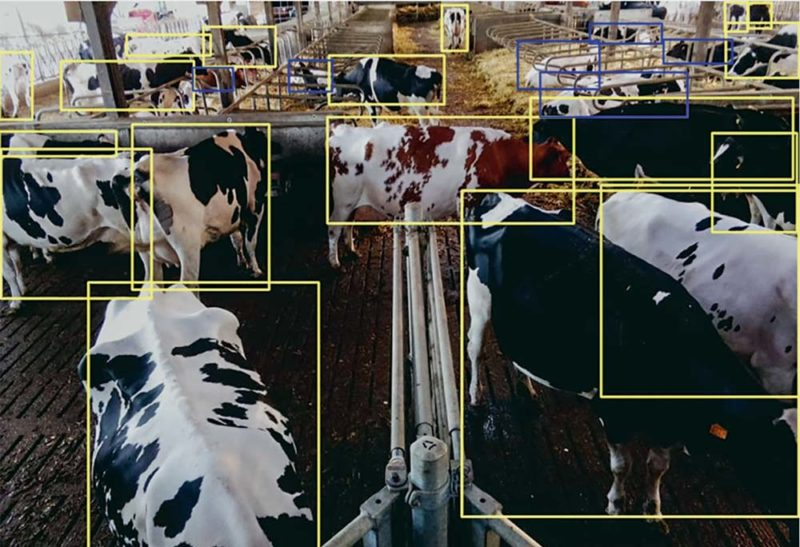Le système Copeeks permet de suivre chaque animal et d'analyser l'intensité des déplacements.
