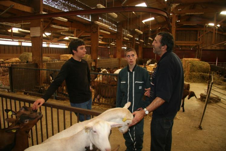 L'élevage caprin sert de support aux formations. © D. Hardy