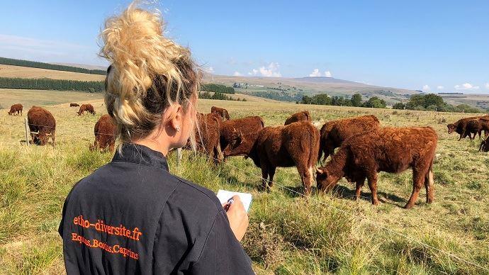 La vue, l'ouïe, le toucher, l'odorat et le goût : comment fonctionnent les 5 sens des bovins ? Comment perçoivent-ils leur environnement ? (©Pauline Garcia)