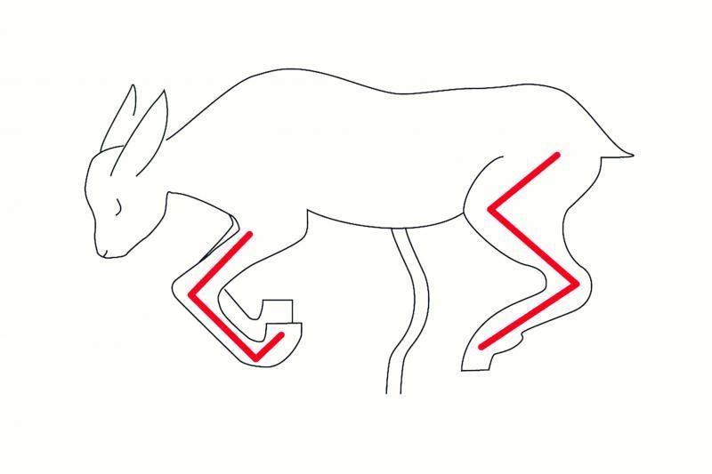 Une astuce pour vérifier la position de l'agneau : les pattes avant forment un U et les pattes arrière un Z, ce qui est facilement identifiable à l'intérieur de la brebis. - © L. SAGOT