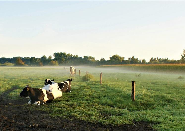 La complémentarité entre exploitations d'élevages et exploitations céréalières peut aussi être recherchée à une échelle géographique plus large. © FotoRieth