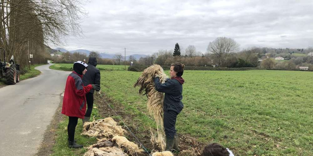 Les lycéens ont paillé les futures plantations de la ferme Uhartetxerri, à Saint-Pée. © Crédit photo : Photo J. C.