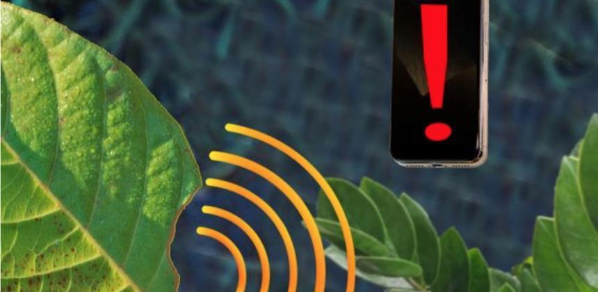 Des chercheurs ont injecté des capteurs à des plantes qui sont capables grâce à une intelligence artificielle de déterminer l'origine d'un stress. © MIT