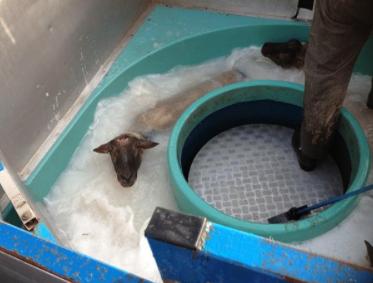 L'action sanitaire au service du bien-être animal.
