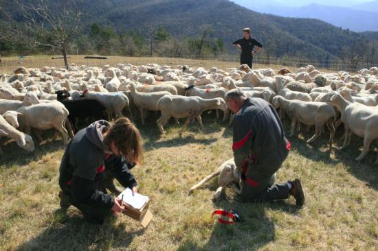 Pastoralisme : Un GPS pas comme les autres au service des éleveurs.