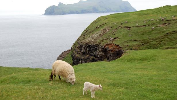 Gardien d'une clôture à mouton : l'offre insolite à pourvoir sur une petite île d'Écosse.